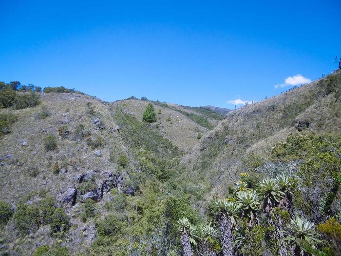 Al Aire Libre Frailejon Montañas❤ Mountain Nature Paisaje Vegetacion Vegetation