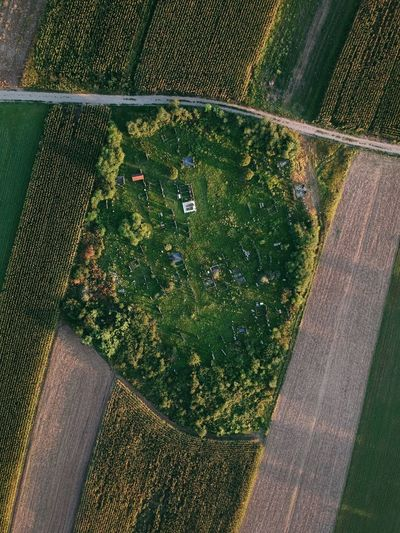 Aerial Cemetery High Angle View Green Color Day Pattern Nature Plant Sunlight Outdoors Growth No People Field Grass Land Shadow Directly Above Agriculture