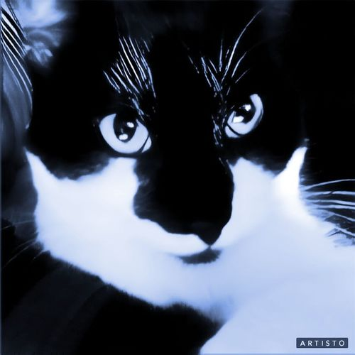 another one of My little Joker. Cat Portrait Cat Portrait Bright Eyes Wide Eyes Front View Art Close-up Calm Beauty Indoors  Photography Taking Photos Feline Pet Joker Looking At Camera Black Color Headshot Pets
