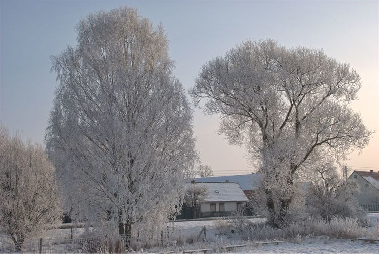 Cold Temperature Day Nature Oderbruch Sky Snow Tree Winter