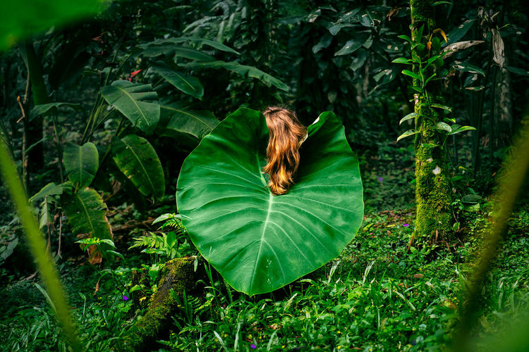 Beauty In Nature Day Forest Grass Green Color Leaf Lush Foliage Nature Outdoors Place Of Heart Plant Fresh On Market 2017