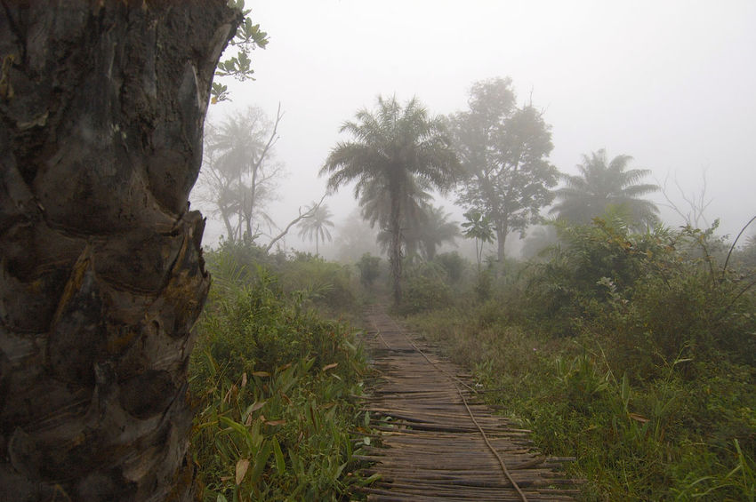 On the road from Quebo via Ché Ché to Gabu in Guinea-Bissau. Guinea Guinea-Bissau Path Republic Of Guinea-Bissau República Da Guiné-Bissau West Africa Wooden Bridge Adventure Africa Beauty In Nature Bridge Fog Landscape Nature Outdoors Pathway Pathway In The Forest