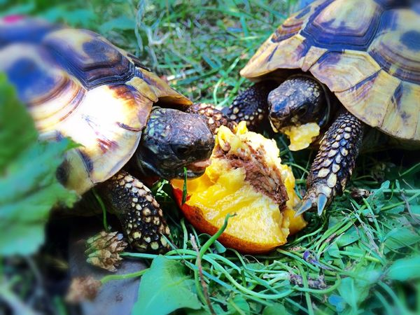 turtle news Animals Animal_collection Animal Photography EyeEm Nature Lover For My Friends That Connect Turtle Love Turtles Turtle Nature_collection Nature