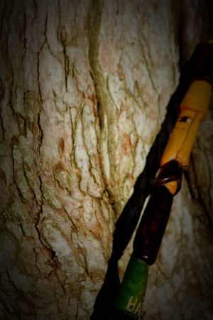 Tree Wood Wood On Wood Wood Supporting Wood Lean On Me Haiti Hatian Stick