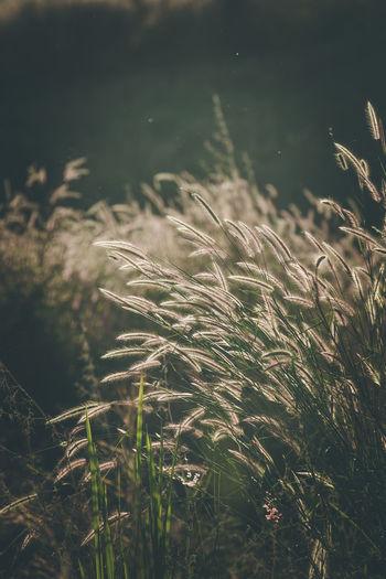 Grassland Leaf