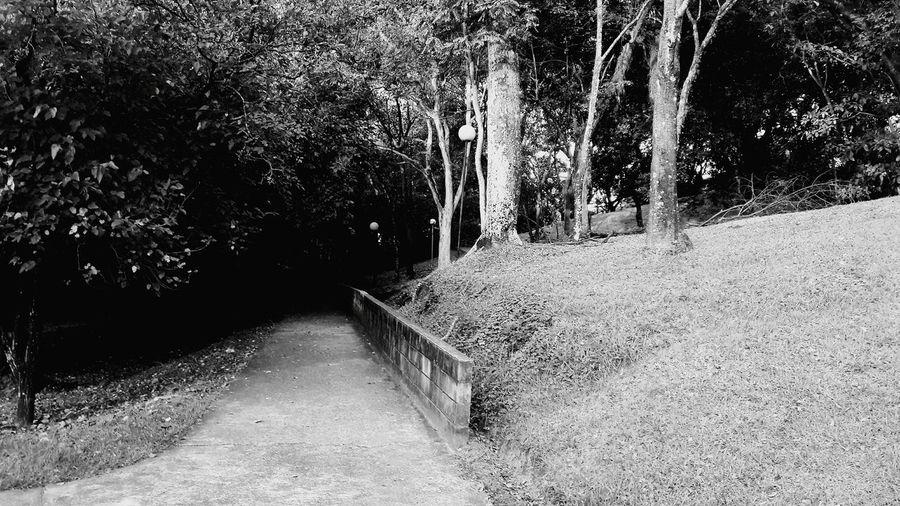 Escolha seu caminho Fotografia Black & White Fotography Brazilian Brazil Hello World Preto & Branco Piracicaba Caminho Estrada Way To Go Home Way