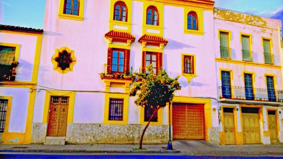 Paint The Town Yellow Córdoba Yellow Naranjas Buildingart Travel Windows Whiteandyellow Architecture