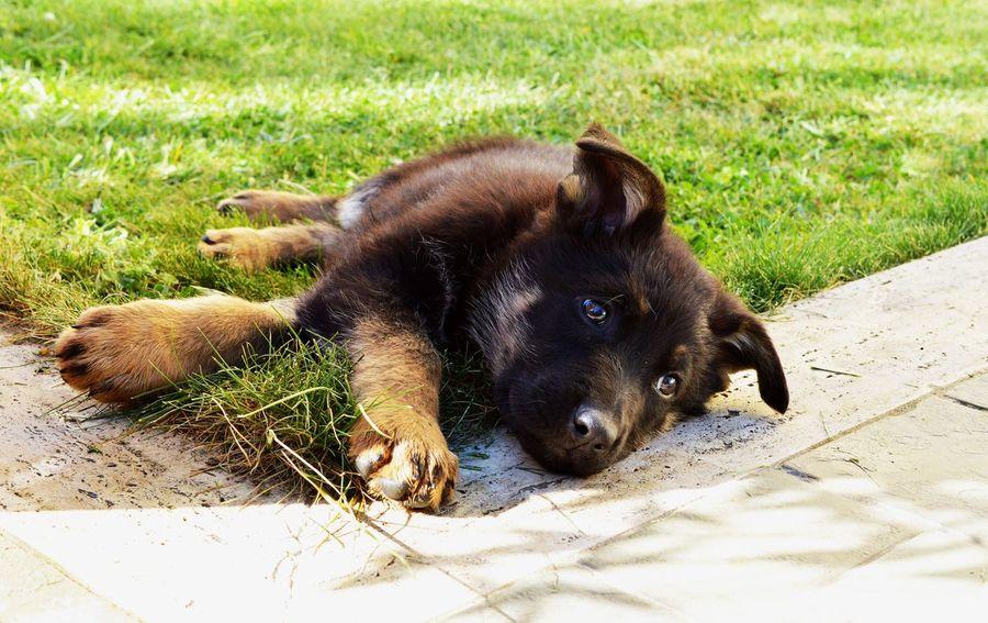 🐶 Dog Nikonphotography Nikon D3200 EyeEm Italy Perugia Photo Nikon