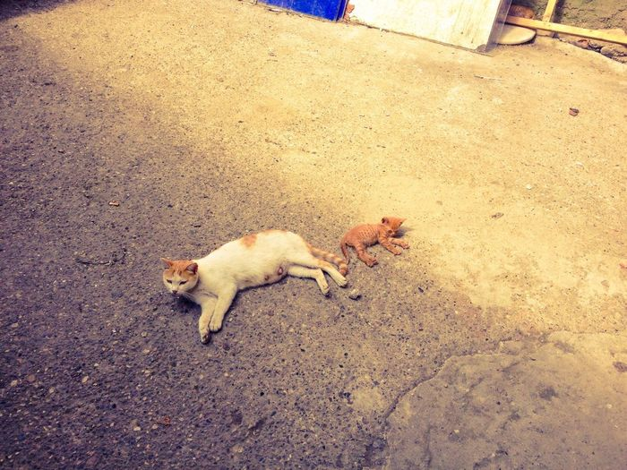 High angle view of cat and kitten relaxing on street