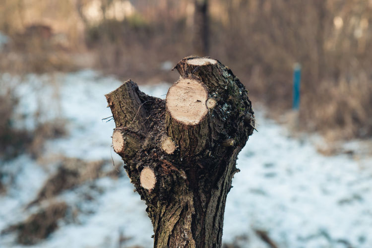 Close-up of dead tree during winter