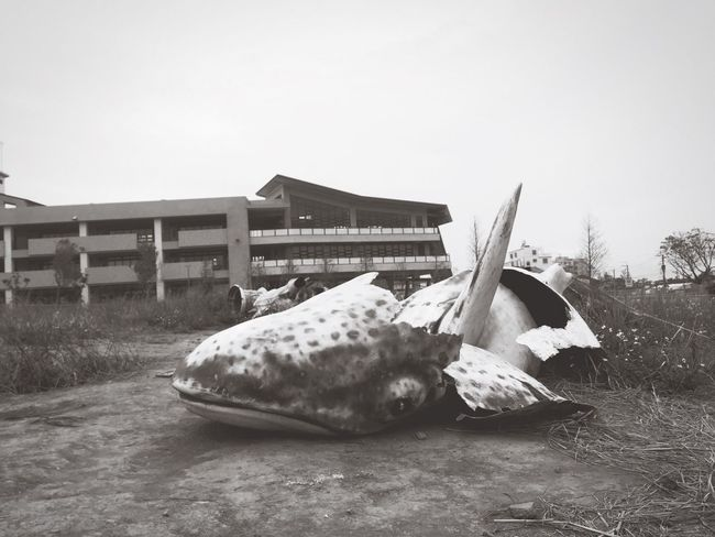 Showcase: January Shark Cemetery Broken Jean Day Whale