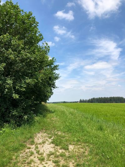 Plant Green Color Sky Tree Growth Beauty In Nature Field Cloud - Sky Grass Tranquil Scene Tranquility Land Scenics - Nature Environment Sunlight Outdoors No People Landscape Day Nature