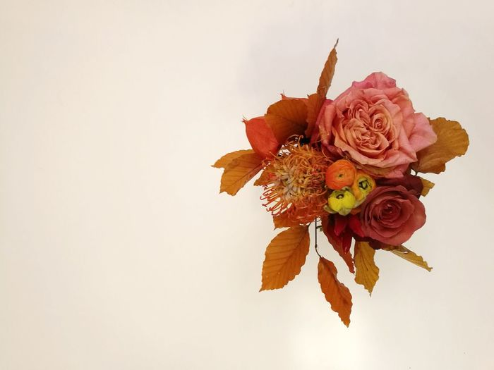 Flower Rose - Flower No People Bouquet Studio Shot Flower Head Indoors  Fragility Nature Close-up Freshness Day Bouquet Of Flowers Roses Autumn Colors Autumn Fall Colors Fall Beauty In Nature Nature Flowers Multi Colored