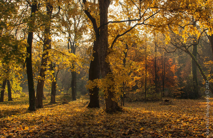 Alboretum Autumn Beauty In Nature Change My Favorite Place Nature Outdoors Season  Tree Woods Yellow