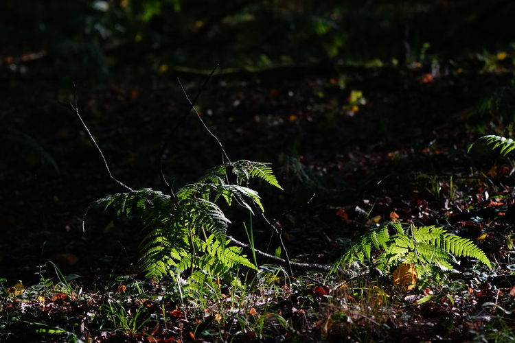 Beauty In Nature Close-up Day Field Focus On Foreground Food Forest Green Color Growth Land Leaf Leaves Moss Nature No People Outdoors Plant Plant Part Selective Focus Tranquility Tree