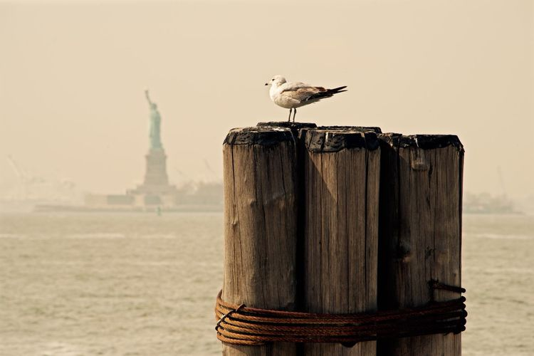 Miss Liberty Battery Park Miss Liberty  NYC NYC Photography NYC Street Photography Nikon Pier Travel USA Nikonphotography No People Outdoors Sea Seagull Street Waterfront The Traveler - 2018 EyeEm Awards