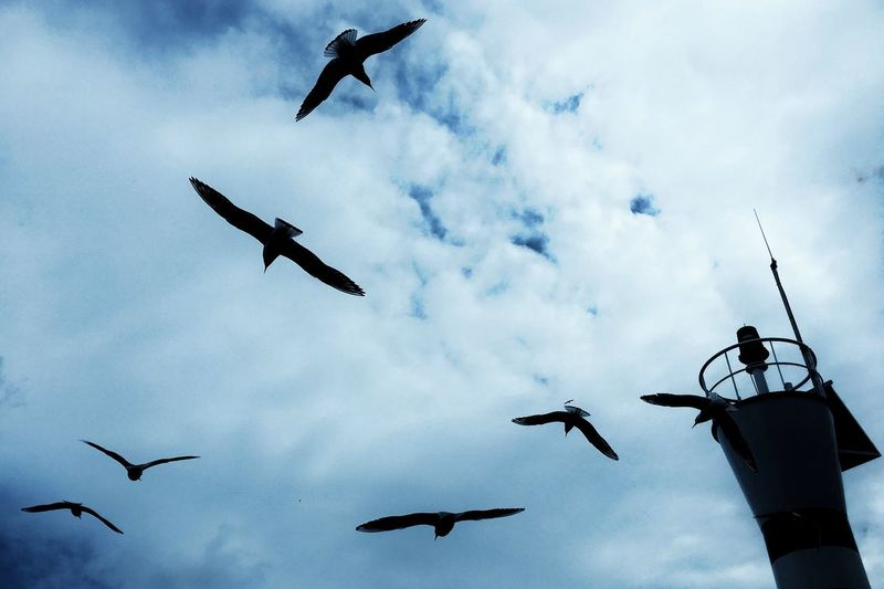 Seagulls hanging in air Sea Sealight Fliying Birds