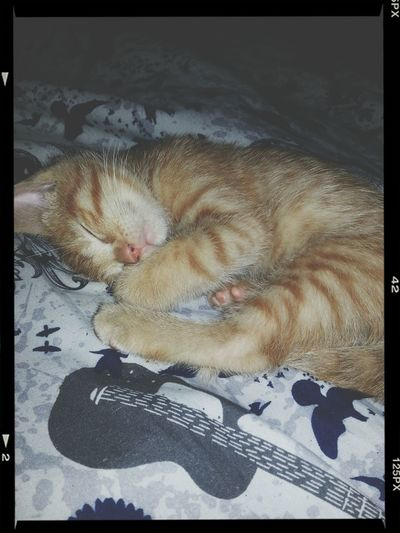 My purrrrfect angel. ? ? Fortheloveofcats Sleepykitty