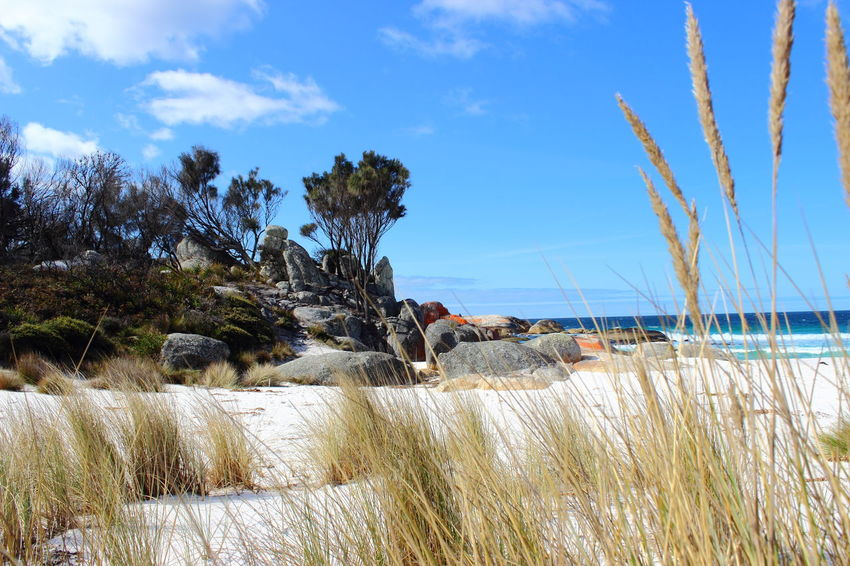Australia Australian Landscape Bay Of Fire Bay Of Fires Beach Beauty In Nature Blue Grass Growth Landscape Marram Grass Nature No People Outdoors Plant Sand Scenics Sea Sky Tasmania TasmaniaAustralia Tranquil Scene Tranquility Tree Water Been There.