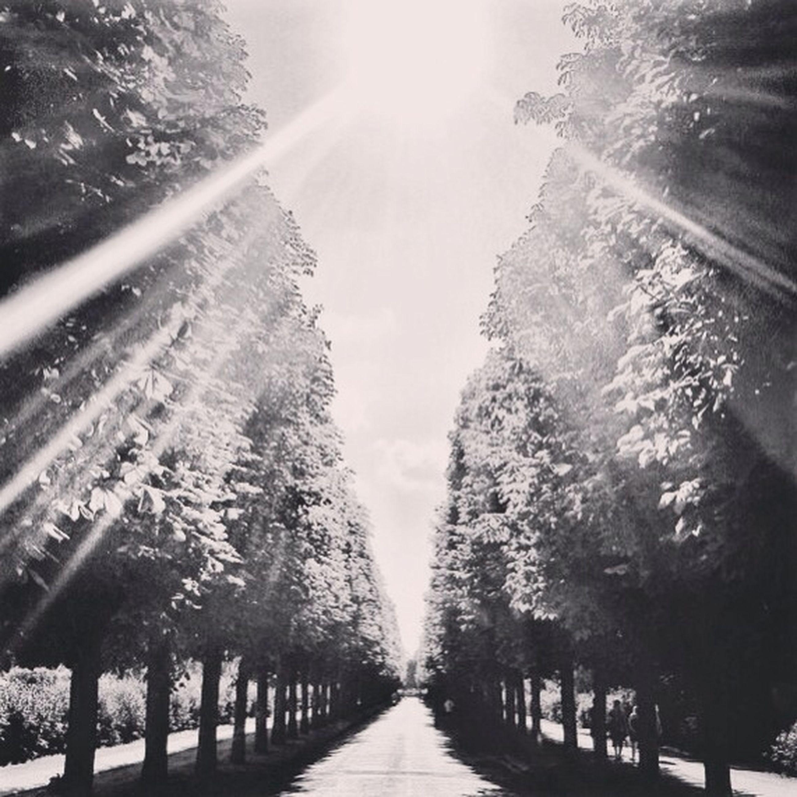 the way forward, diminishing perspective, vanishing point, tree, sunlight, road, transportation, sunbeam, sun, narrow, nature, sky, tranquility, sunny, footpath, lens flare, day, railing, beauty in nature, long