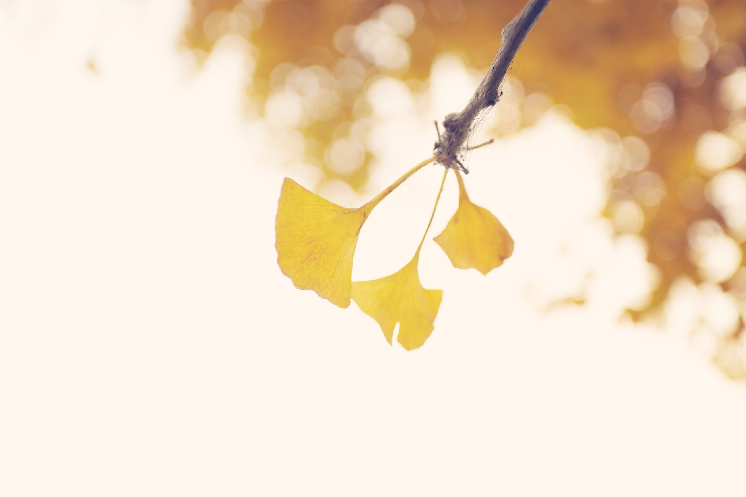 yellow, close-up, leaf, focus on foreground, growth, nature, fragility, flower, stem, selective focus, autumn, branch, low angle view, twig, plant, beauty in nature, season, freshness, no people, outdoors
