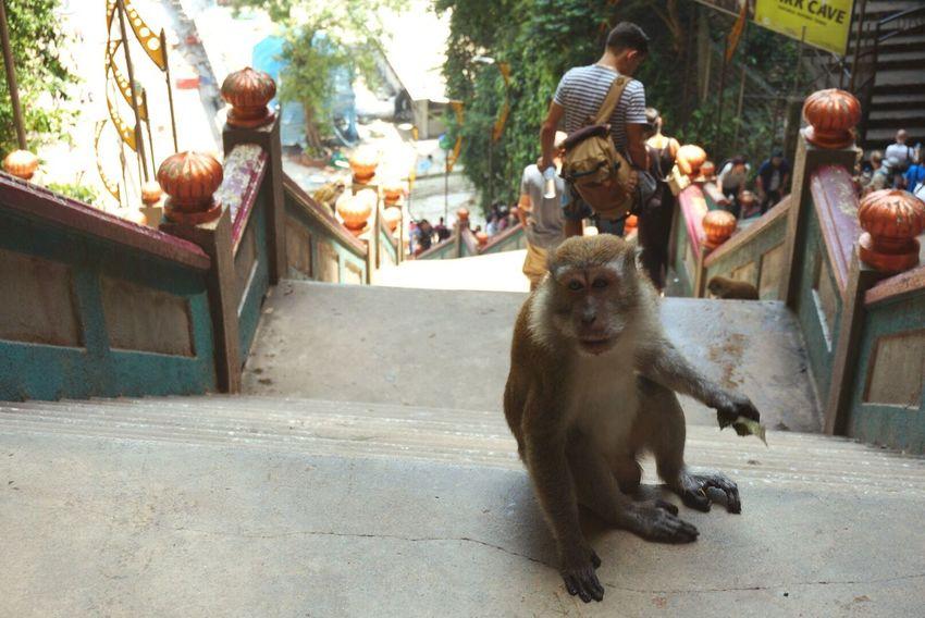 Batu Caves Malaysia Monkey Travel