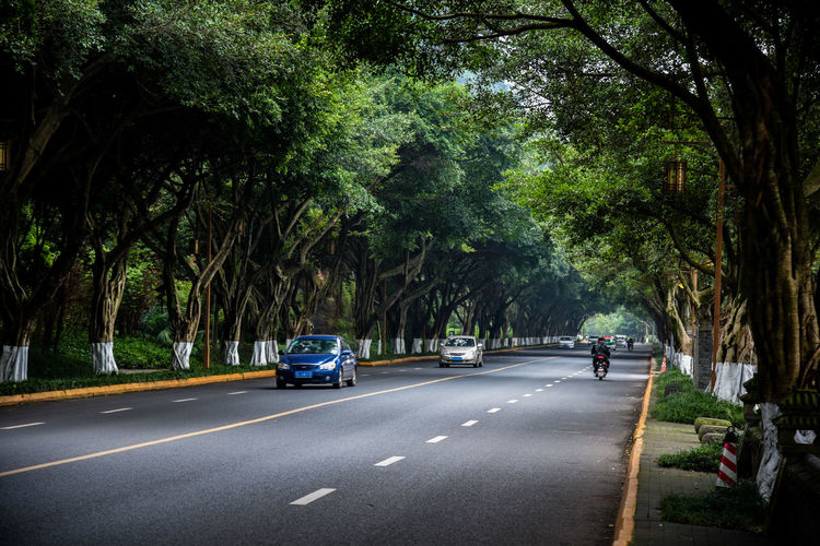 Cars on street by trees