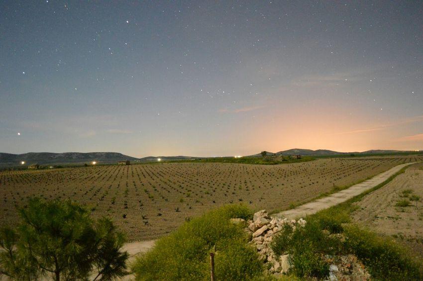 Campos de viñedos de Ciudad Real Enfocae EyeEm Nature Lover EyeEm Best Shots EyeEm Best Shots - Night Photography