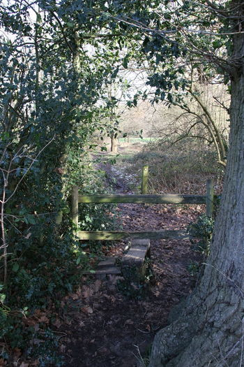 Arch In Trees Beauty In Nature Day Fence Growth Leaves Mud Nature No People Outdoors Public Footpath Stile Surrey Countryside Tree Walk Walking