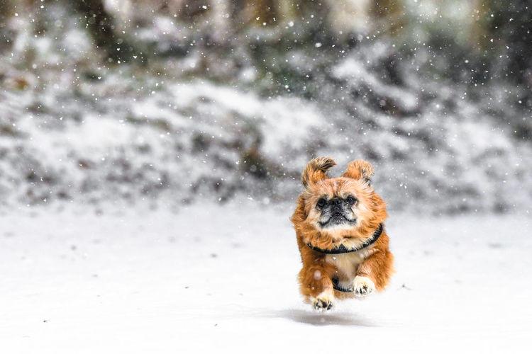 little dog Snow