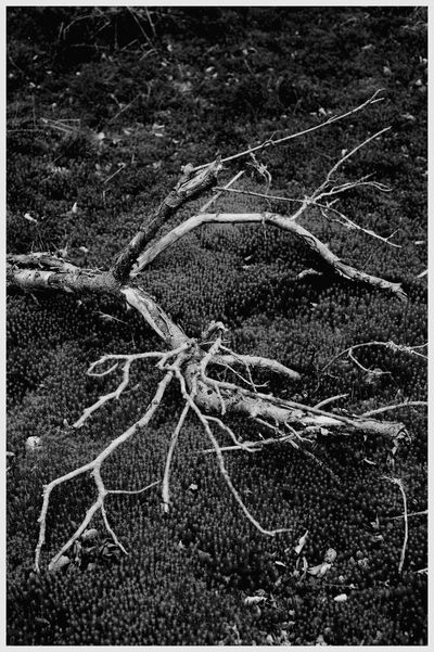 Beauty In Nature Textures Light And Shadow Forrest Walk Tree Trunk Kirriemuir Countryside Kate's Wood Fragility Branch black and white