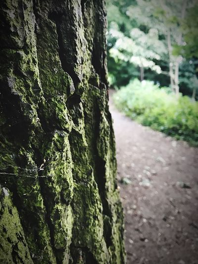 Rock face or Tree Bark Day No People Focus On Foreground Outdoors Textured  Moss Tree Close-up Green Color Nature Tree Trunk Built Structure Architecture Rock 50/50