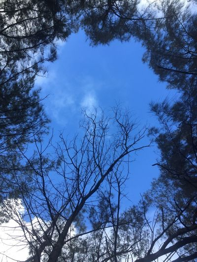 Ocean Above Tree Sky Low Angle View Bare Tree Nature Branch Blue No People Outdoors Beauty In Nature Tranquility Silhouette Day Treetop Bleak