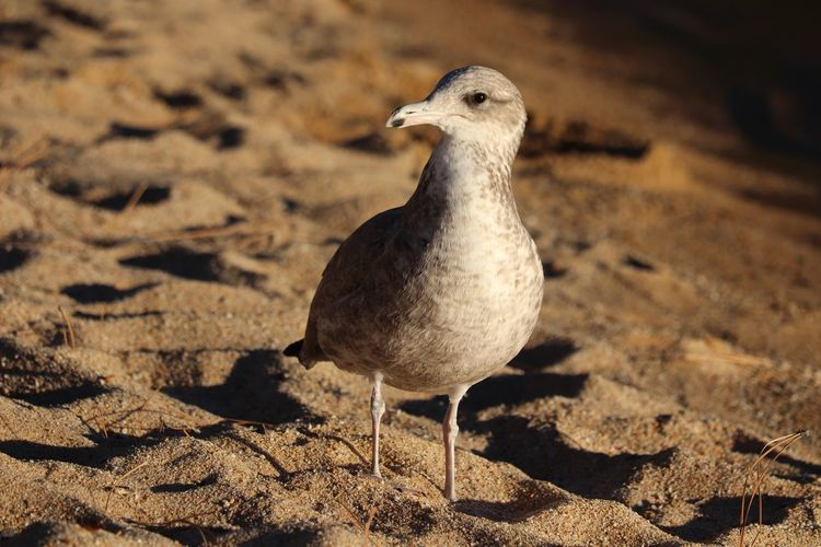 Close-up of seagull perching on land