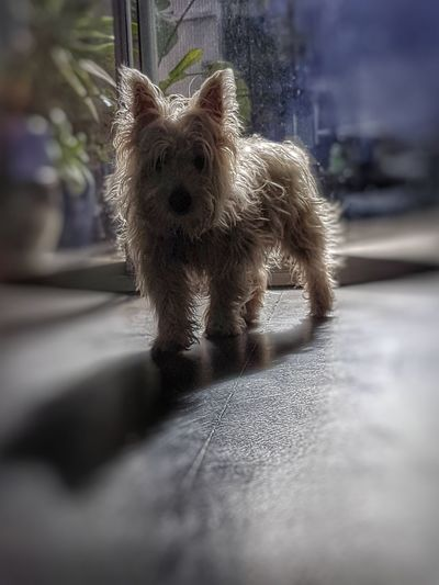 One Animal Dog No People Animal Themes PhonePhotography Doggielove Dog❤ Dog Life West Highland White Terrier Puppys PuppyLove Beauty In Nature Dog Lover Dogs Of EyeEm Dogoftheday Dog Photography Dogs The Week On EyeEem