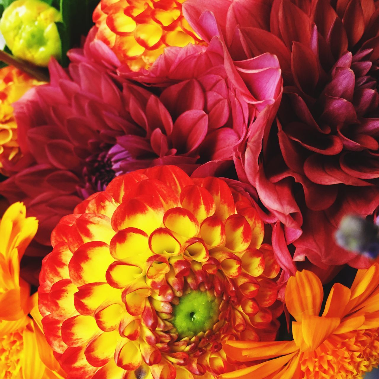 Full Frame Of Multi Colored Flowers