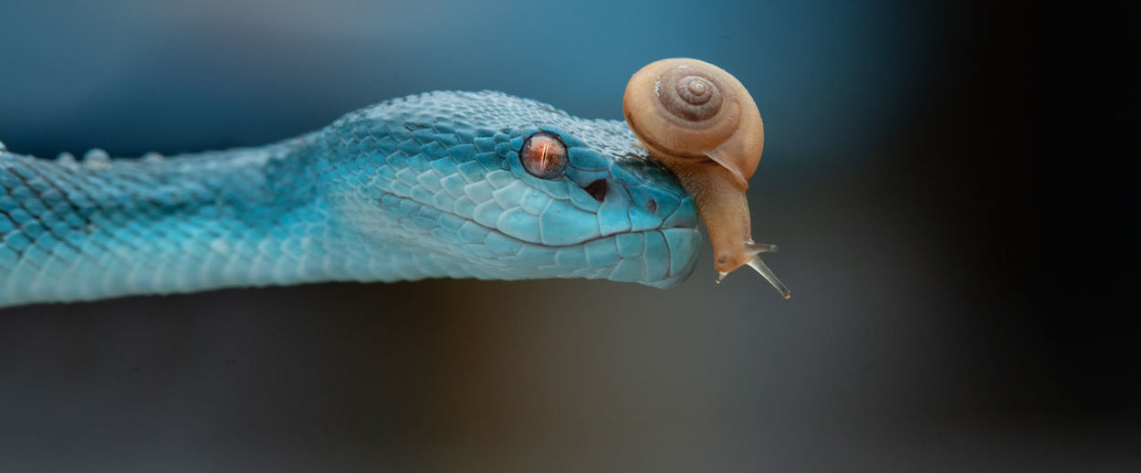 Close-up of snake and snail
