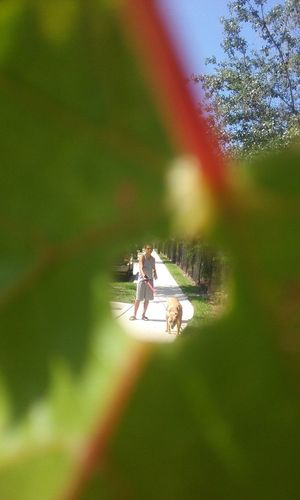 Feel The Journey Leaf Circle Frame Boy Dog Walking Around Enjoying Life Sunny Day Florida Life Enjoying The Sun Enjoying Life From My Point Of View Hole Relaxing 43 Golden Moments Fine Art Photography On The Way