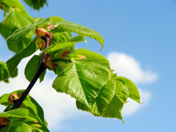 Low Angle View Of Flower Buds Growing Against Sky