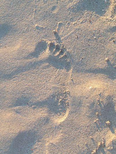 Foot Beach Orme Piede Sabbia Sand Sole Spiaggia Sun
