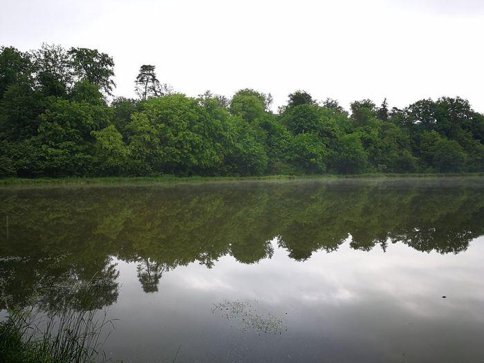 Tree Water Lake Reflection Symmetry Sky Reflection Lake Reflecting Pool Standing Water Lakeside