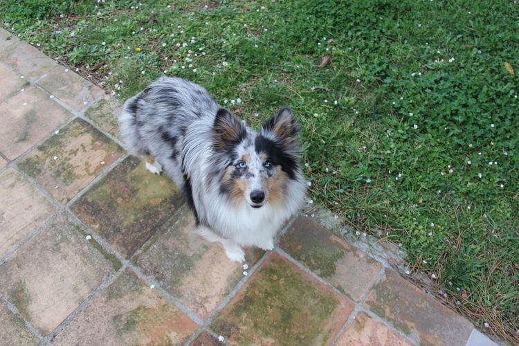High angle portrait of dog on grass