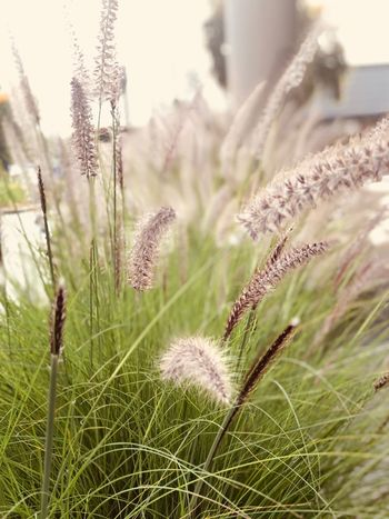 Plant Growth Nature Beauty In Nature Focus On Foreground Tranquility No People Tranquil Scene Flower Day Outdoors Grass Vulnerability  Land Close-up Field Fragility Sunlight Flowering Plant Plant Stem