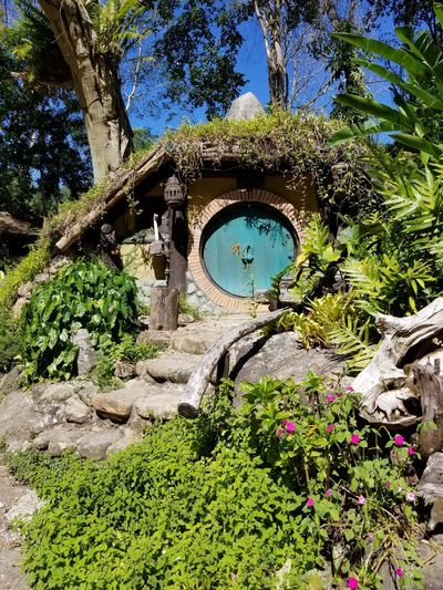 Hobbit hole Round Door EyeEm Selects Hobbit Hobbiton Hobbit House Hobbit Hole Bilbobaggins Lord Of The Rings Tree Flower Sunlight Sky Architecture Built Structure Building Exterior Green Color Plant Countryside Domestic Garden Greenery Garden Archway Botanical