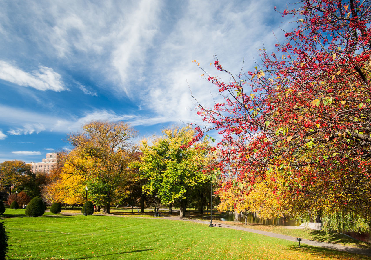 autumn, tree, plant, change, beauty in nature, nature, cloud - sky, sky, grass, day, scenics - nature, park, tranquility, orange color, tranquil scene, park - man made space, landscape, growth, no people, outdoors