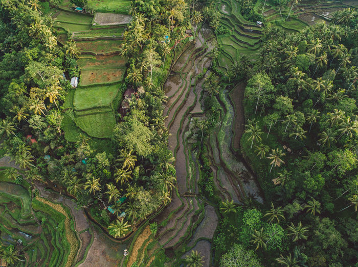 High angle view of trees growing in farm