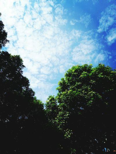 蓝天白云 🌞☁ Sky Tree Beauty In Nature Cloud - Sky Low Angle View Nature Outdoors No People Day Blue 蓝天白云🌞☁ First Eyeem Photo