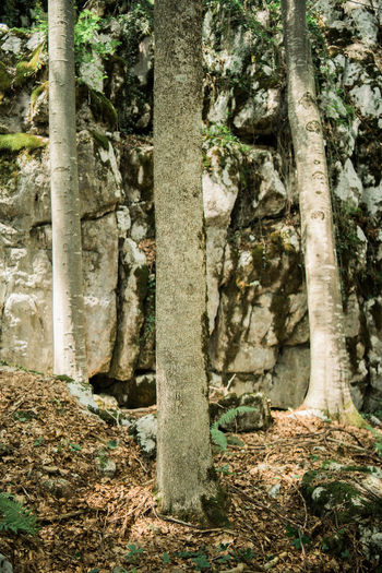 Rock Tree Beauty In Nature Day Environment Forest Growth Land Moss Nature No People Outdoors Plant Plant Part Rainforest Rock Rock - Object Solid Tranquility Tree Tree Trunk Trunk WoodLand