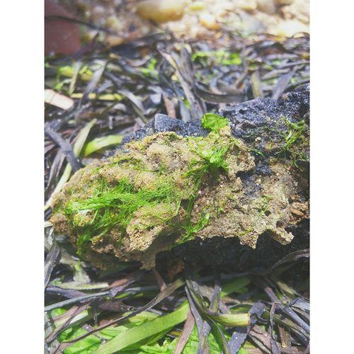 The rock NY Longisland Amityville Bay Water Seaweed Rock Vscocam IGDaily Followme