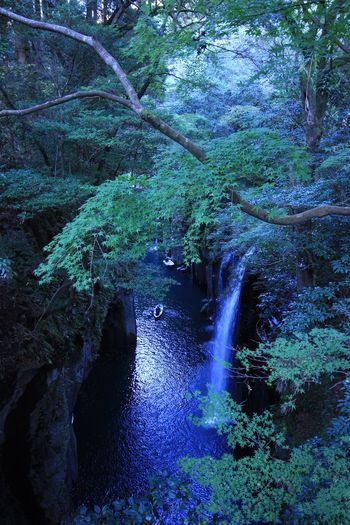 Nature Beauty In Nature Forest Water River Outdoors Scenics Day Growth No People Landscape Tree Waterfall Tranquility